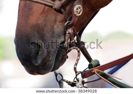Closeup of mouth and nostril on brown horse