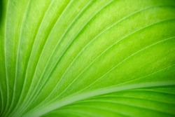 Closeup of nature view of green leaf on blurred greenery background with copy space using as background natural green plants landscape, ecology, fresh wallpaper concept.