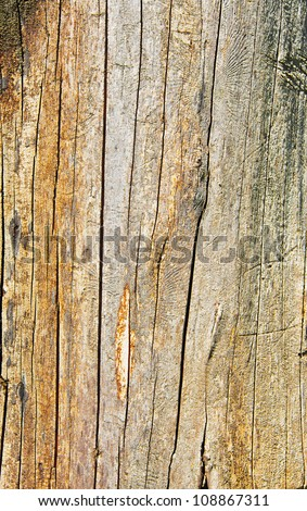 Closeup of old tree trunk texture with cracks