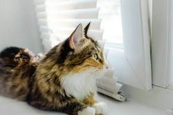 Closeup of one female cute cat lying down by windowsill sill indoors of house home room looking out through window.