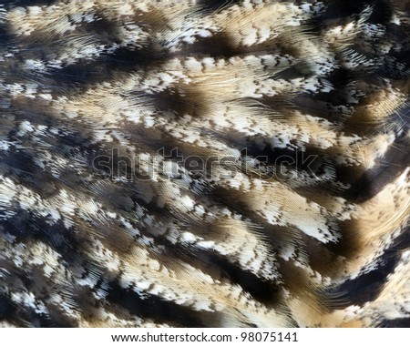 closeup of owl feathers