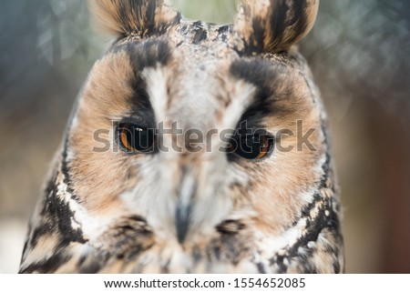 Closeup of owl head. Cropped picture. Wallpaper picture