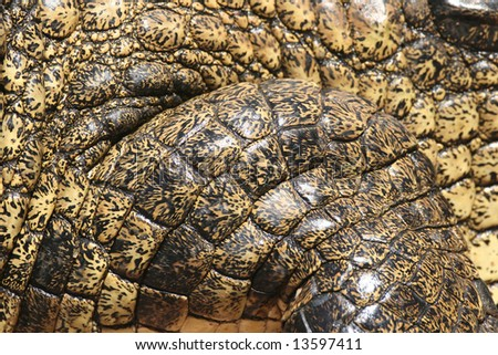 Closeup of pachyderm structures of Dangerous Crocodile at Kariba lake. Zambia. Africa