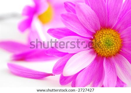 Палитра цветов цвет лиловый палитра