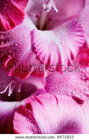 Closeup of pink flower with water drops