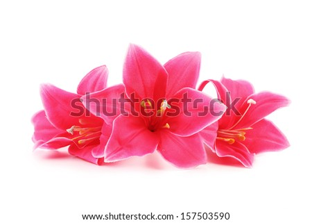 Closeup of pink flowers. Isolated on a white background.