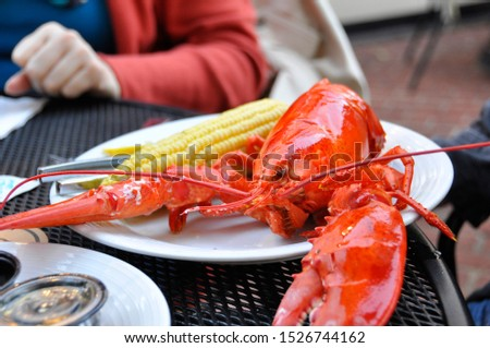 Closeup of plated, cooked, whole lobster with corn on the cob.  The dinner entree is set on a white, ceramic plate.