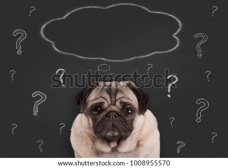 closeup of pug puppy dog sitting in front of  blackboard sign with hand drawn chalk question marks and blank thought bubble Сток-фото ©