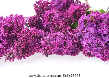 Closeup of purple lilac isolated on white background #569698705