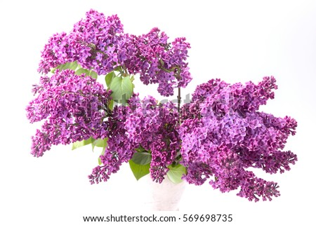 Closeup of purple lilac isolated on white background #569698735