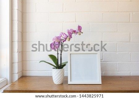 Closeup of purple phalaenopsis orchid in pot with blank square picture frame against white painted brick wall
