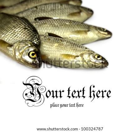 Closeup of raw fish - stock photo