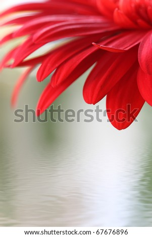 Closeup of red flower with water