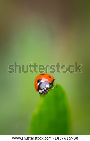Closeup of red ladybug on top of green leaf with a soft blurred background. #1437616988