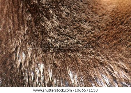 Closeup of river otter fur #1066571138