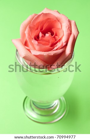closeup of rose flower in glass with water droplets