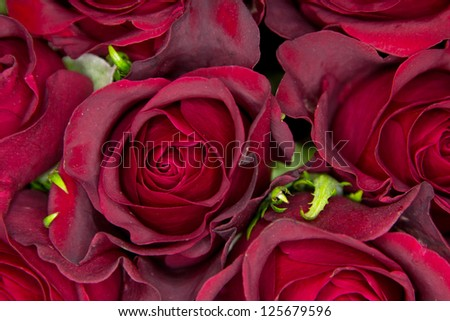 Closeup of roses