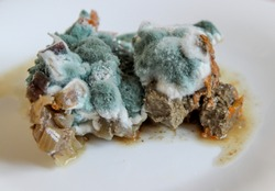 Closeup of rotting food. Mold growing on stewed vegetables and meat