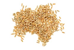 Closeup of rye grain isolated on white background