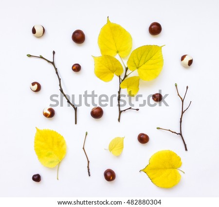 Closeup of set of autumn yellow leaves, chestnuts and branches on white background. Top view, flat lay, view from above