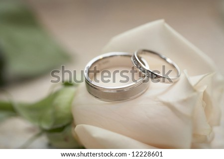 Closeup of silver wedding rings on white rose, DOF focus on diamonds