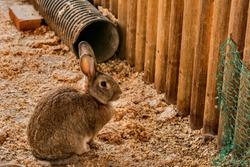 Closeup of single rabbit in wood log enclosure at public park.
