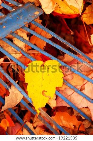 closeup of single yellow leaf with blue rake