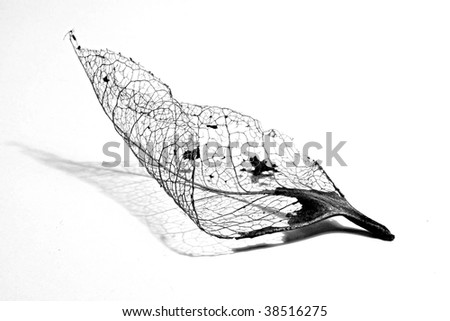 Closeup of skeleton of a deteriorated leaf