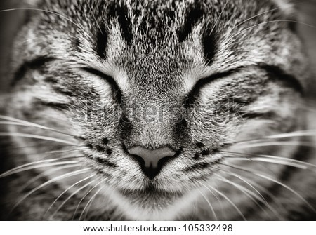 Closeup of sleeping cat face  (Black and white)
