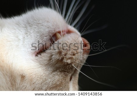 Closeup of sleeping cat's nose, mouth, and whiskers on black background #1409143856