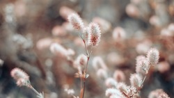 Closeup of soft little wildflowers, abstract floral background, soft focus, beautiful fresh meadow, vintage background little flowers