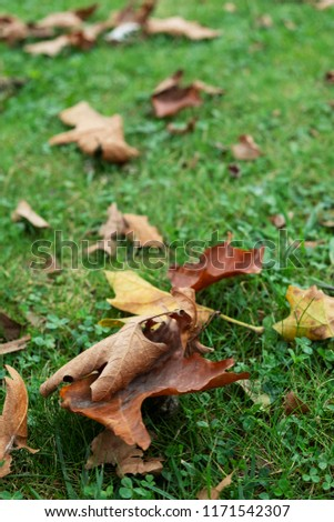closeup of some dry leaves on the grass