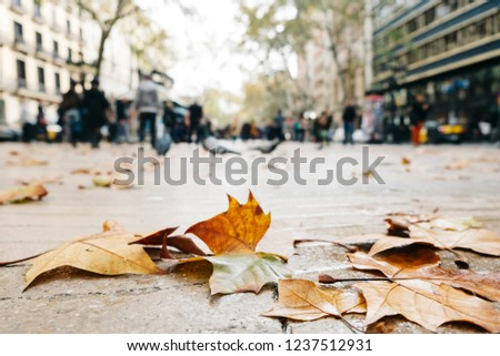 closeup of some dry leaves on the pavement of La Ramba street in Barcelona, Spain, in a rainy day, with some unrecognizable people in the background