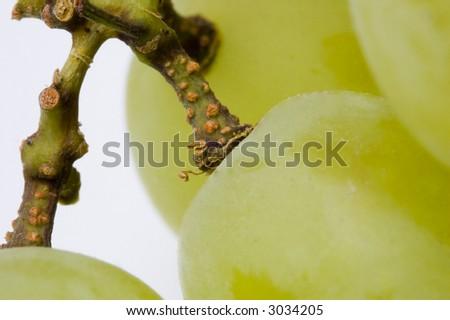 Closeup of some white grapes