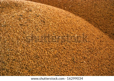 Closeup of soy beans in a storage pile