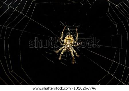 closeup of spider garden spider ...