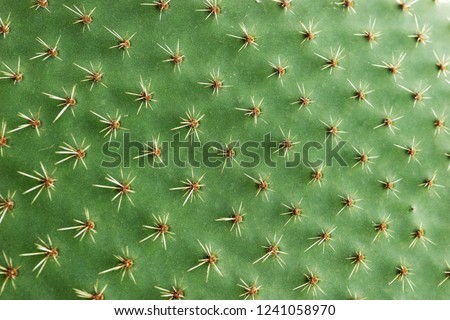 Closeup of spines on cactus, background cactus with spines #1241058970