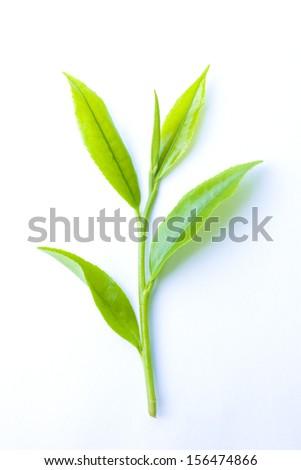 Closeup of tea leaf on white background