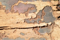 Closeup of Termite attacked wodden plank.