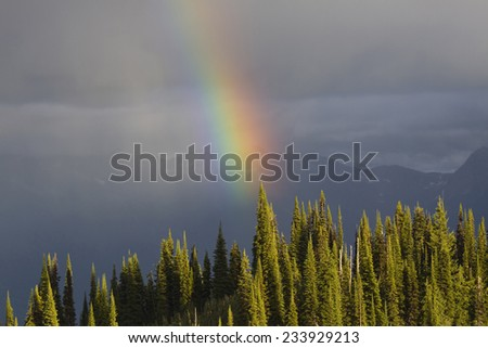 Closeup of the end of a rainbow over a sunlit forest. Mount Revelstoke, British Columbia, Canada