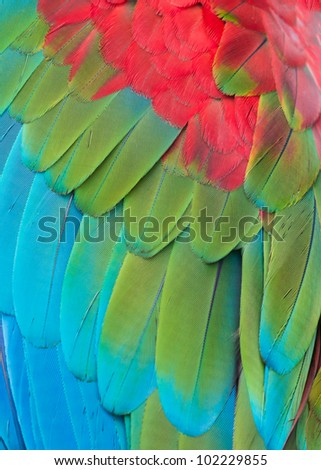 Closeup of the feathers of a green winged macaw