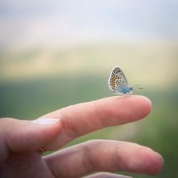 Closeup of the Idas Blue or the Northern Blue (Plebejus idas) butterfly sitting on a finger