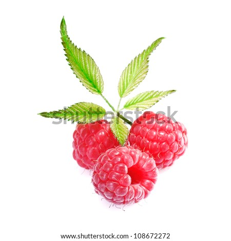 Closeup of three delicious fresh ripe red raspberries isolated on white with their leaves
