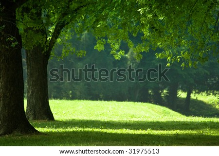 Closeup of trees in sunny park