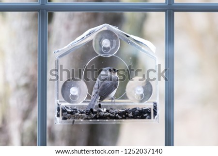 Closeup of tufted titmouse back perched on plastic window bird feeder perch on suction cups with sunflower seeds, peanut nuts, looking, eye during snow, snowing, Virginia #1252037140