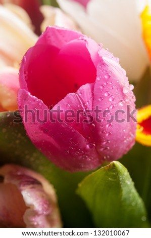 Stock Photo Closeup of tulips flowers on background