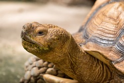 Closeup of turtle head.