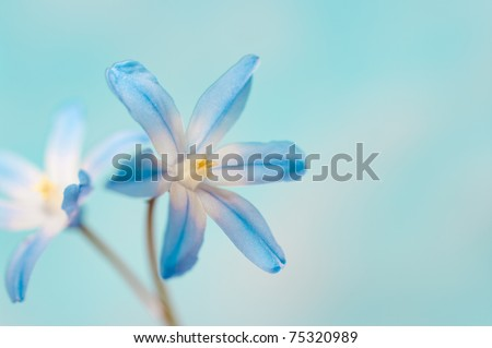 closeup of two blue flowers on a bright background