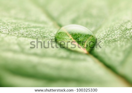 closeup of water drop on fresh leaf macro - Shutterstock ID 100325330