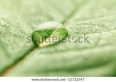 closeup of water drop on fresh leaf macro - Shutterstock ID 52722547
